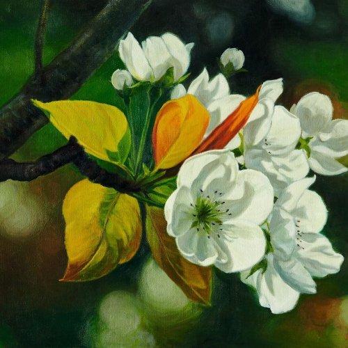 """""""A flower of a pear"""" - Jong Kwan PARK"""
