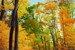 NOLT - Autumn Magic