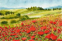 HABELER - Blütenfeld
