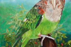 BOTHA - Cape_Parrot